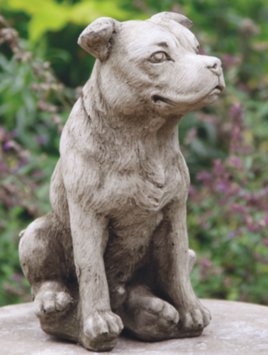 Stafford Bull Terrier Medium